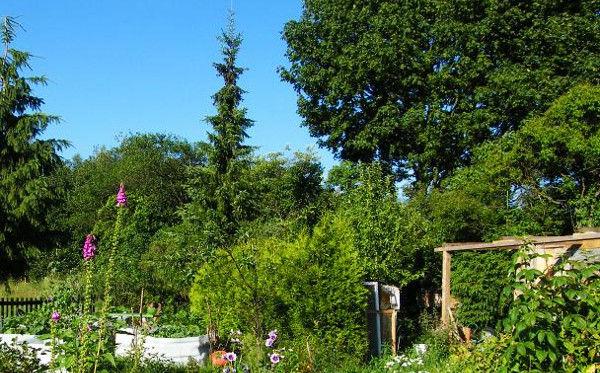 Garten Tuttendorfer Weg