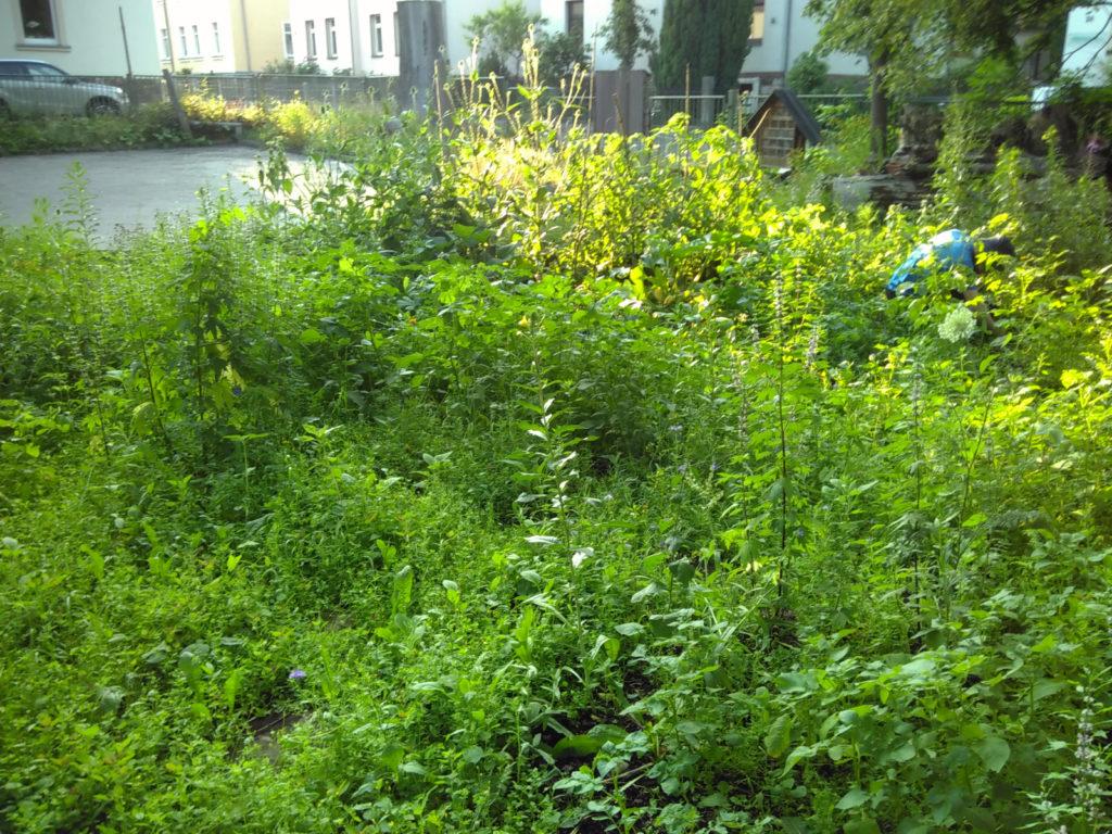 Grüner Pflanzendschungel